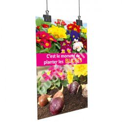 A52- Affiche planter les bulbes - Primevère