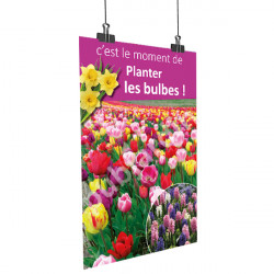 A54- Affiche planter les bulbes - Tulipes