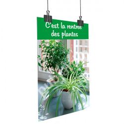 Affiche rentrée des plantes Chlorophytum