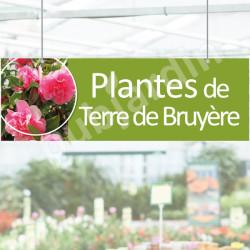 P23- Panneau Plantes de terre de Bruyère